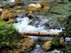 kawasan-falls-cebu-april-2-2010-463