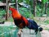 kawasan-falls-cebu-april-2-2010-475