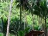 kawasan-falls-cebu-april-2-2010-482