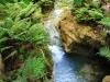 kawasan-falls-cebu-april-2-2010-494